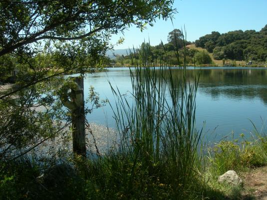 Mcalpine Lake Amp Park San Juan Bautista Ca 95045